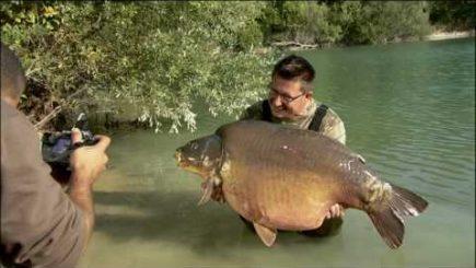 Karpfensee Gigantica 1