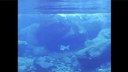 Lachs Island 12
