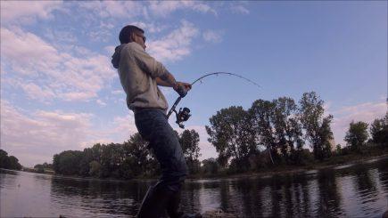 Wels Loire 10