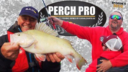 Barsch-Wettbewerb Perch Pro 2018 6/6 8