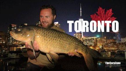 Karpfenangeln in Toronto 1