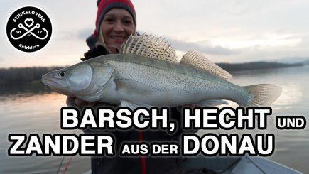 Raubfischangeln Donau in Österreich 1