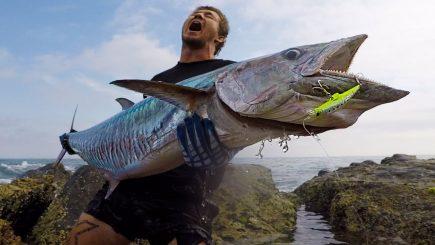 Spanische Makrele macht Action 5